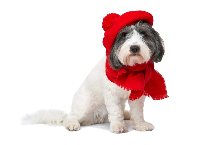 A dog with a red beret and a scarf.