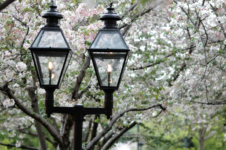 A street lamp framed by cherry blossoms