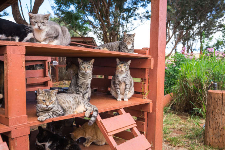 Cats on a wooden structure