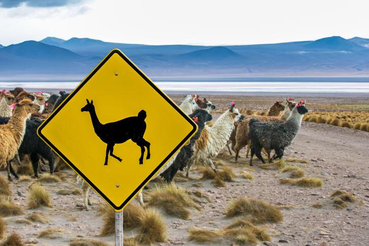 Llama crossing road sign in Bolivia