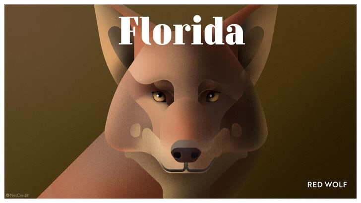 Florida's red wolf
