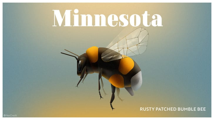 Minnesota's rusty patched bumble bee