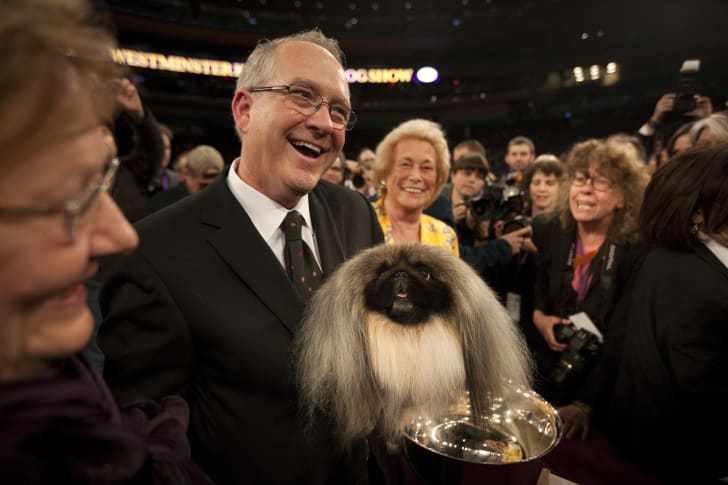 Co-owner and handler David Fitzpatrick holds Pekingese Malachy after winning Best in Show at the Westminster Kennel Club Dog Show in 2012