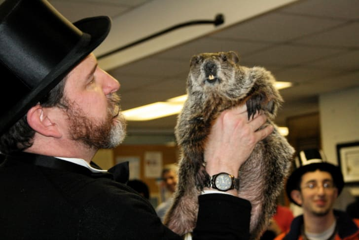 close-up of Punxsutawney Phil