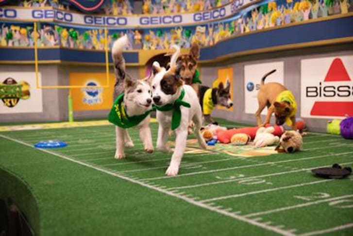 A scene from Puppy Bowl XV
