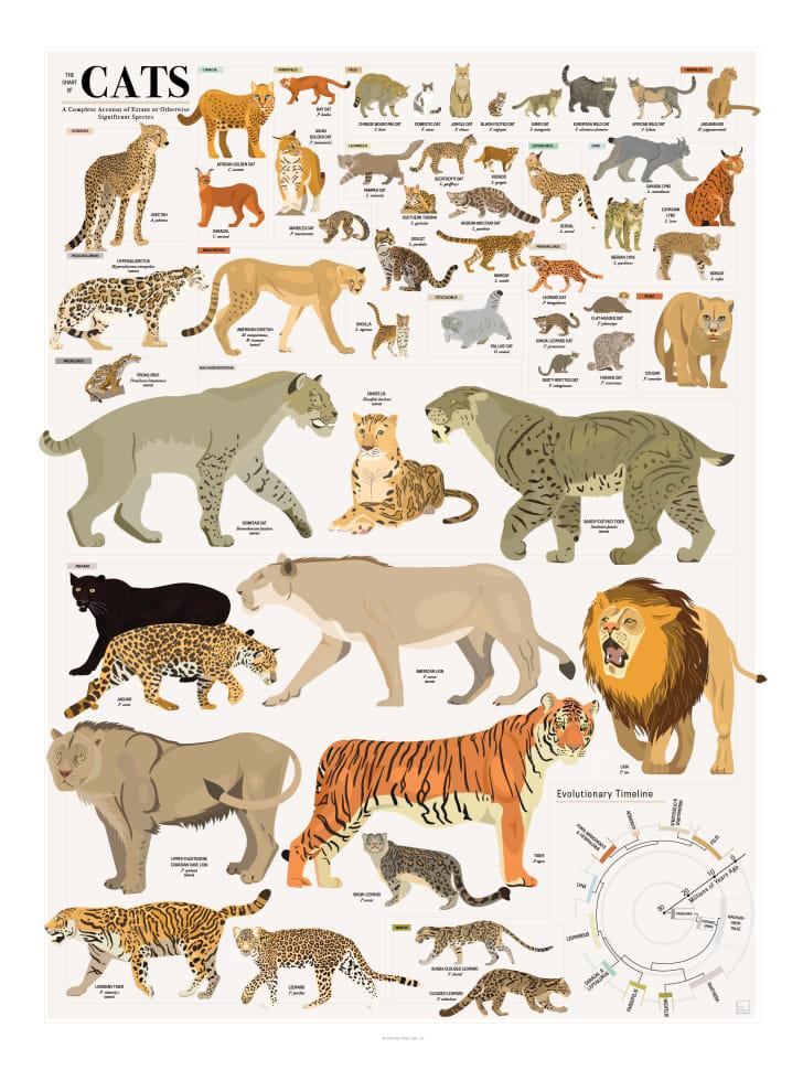 The cat chart