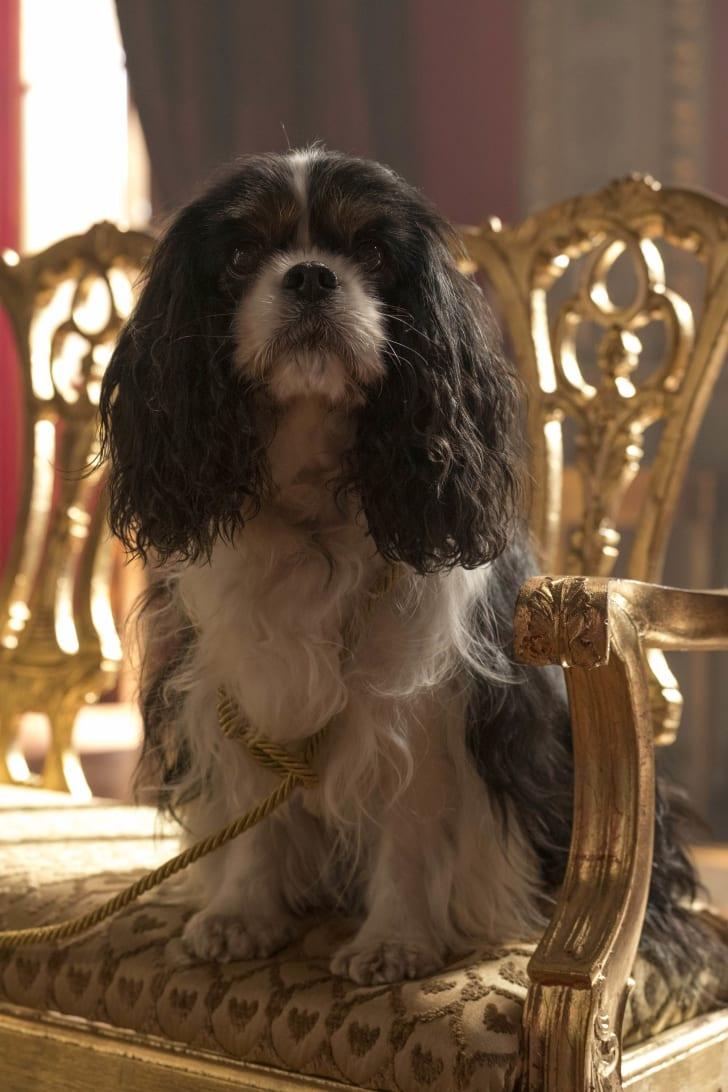 Dash, Queen Victoria's prized dog, in 'Victoria'