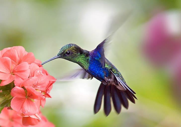 A hummingbird by a flower