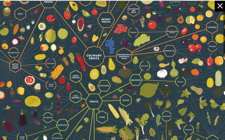 PopChart taxonomy chart of vegetables and fruits