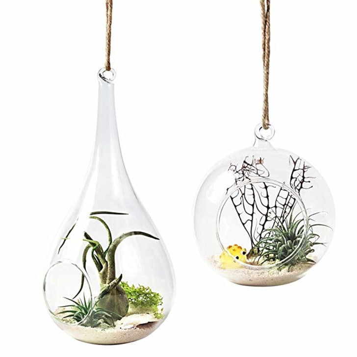 Set of two hanging terrariums