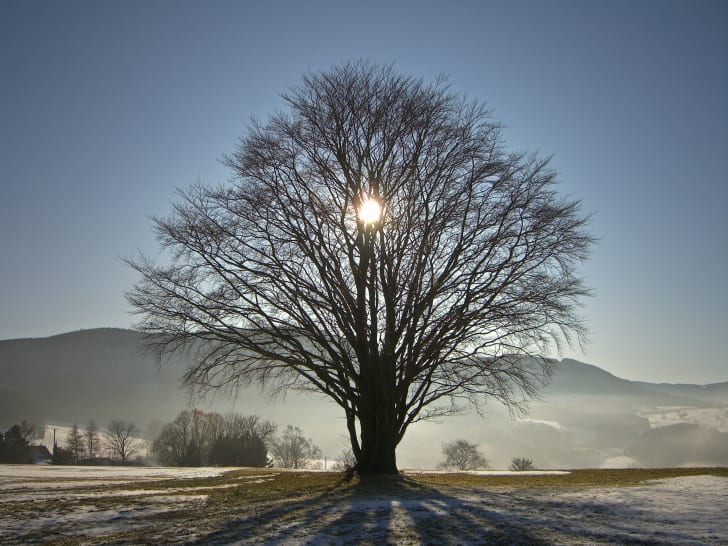 Sun setting behind a tree in the winter