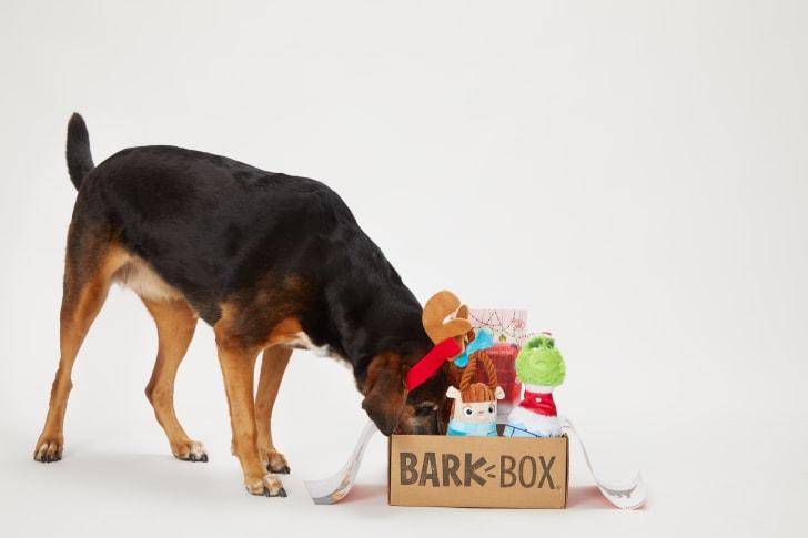 Winter BarkBox