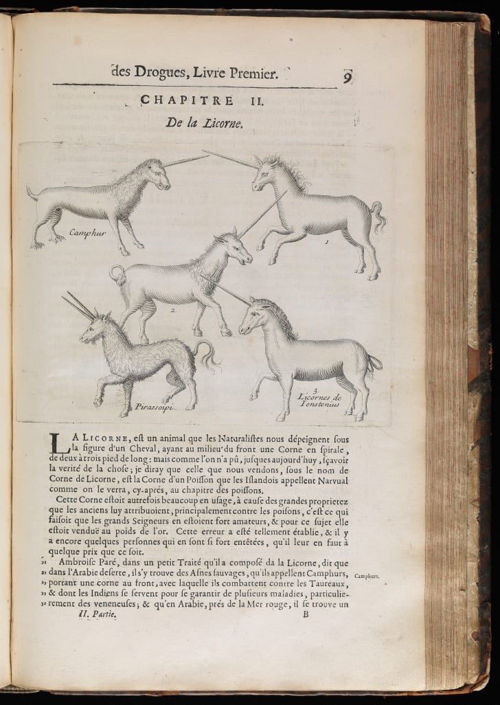 A page from a 17th-century French medical text discussing unicorns