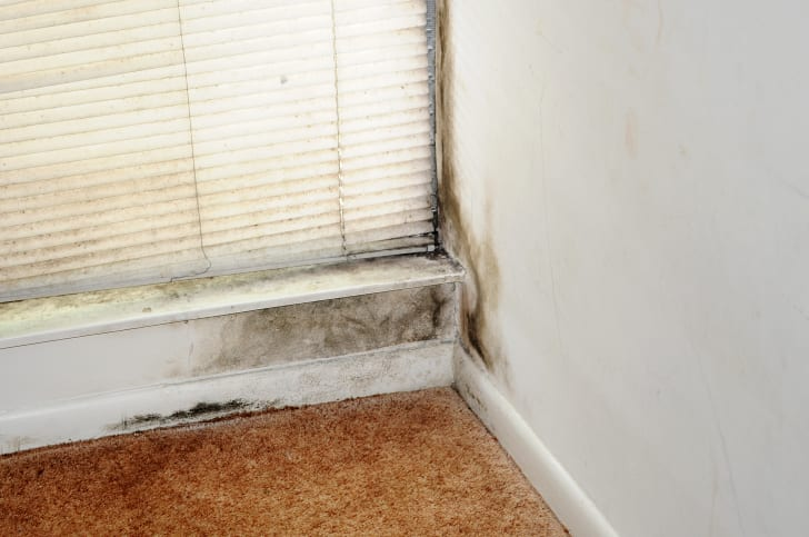 Mold growing under a windowsill and near the carpet of a home