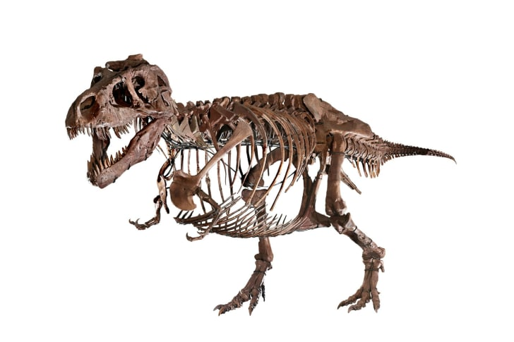 An updated version of Sue the T. rex