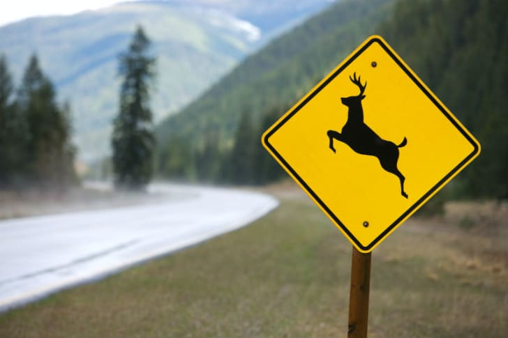 A deer crossing sign is posted next to a road