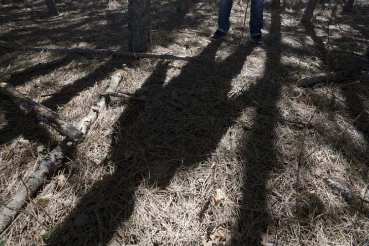 A man casts a shadow in the woods
