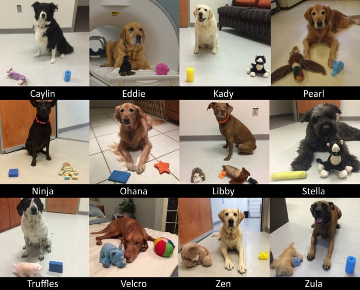 Dogs in a science lab with toys