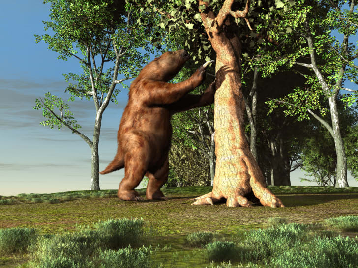 Illustration of a giant sloth