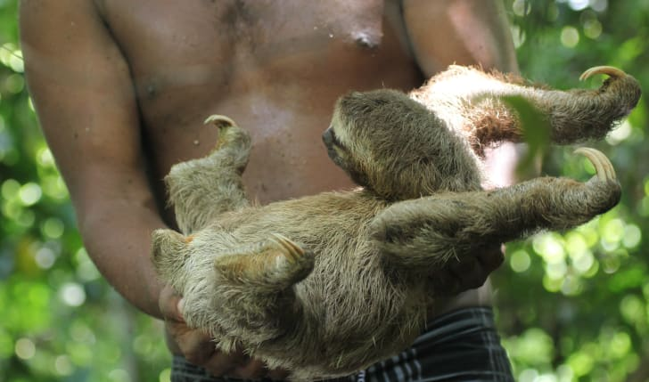 A man holds a sloth