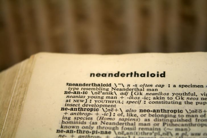 Dictionary page with the word 'neanderthaloid.'