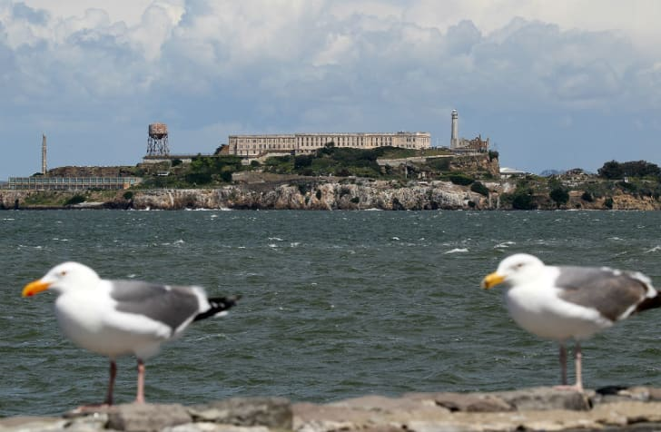 Alcatraz sits in the background of two birds flocking nearby