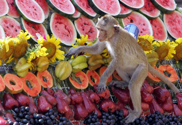A monkey eating various kinds of fruit