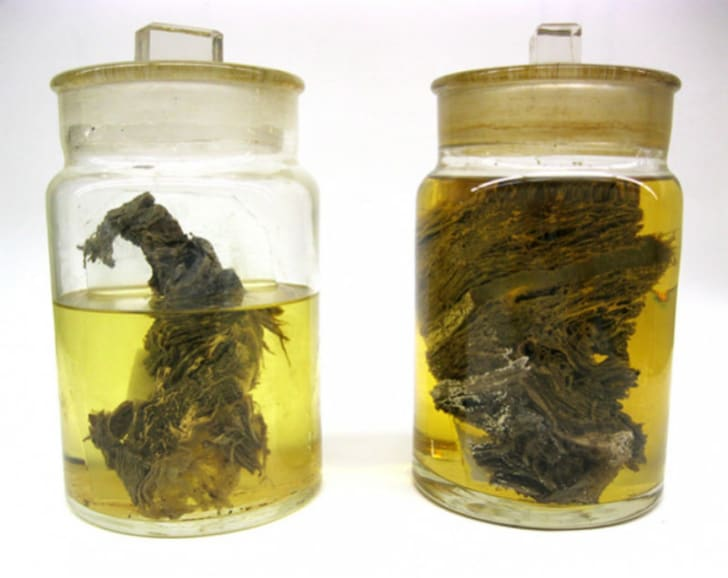 Wooly mammoth flesh is preserved in two jars