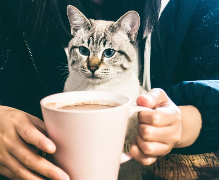 A cat poses with a cup of coffee