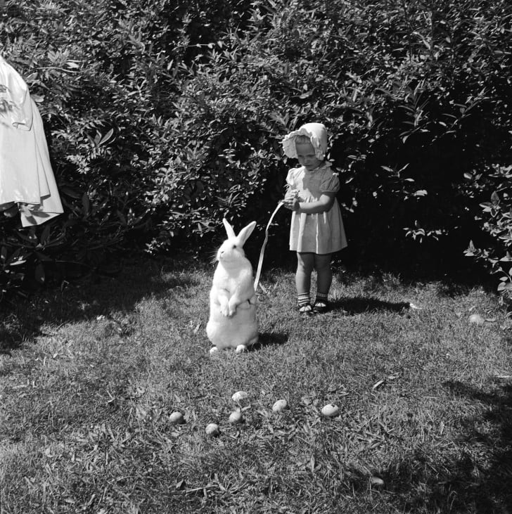 A little girl holds an Easter bunny on a leash, circa 1955.
