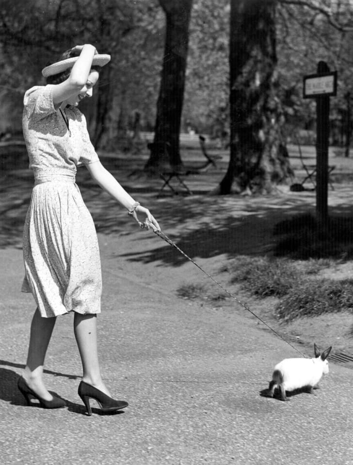 A woman took her Himalayan rabbit, Albrecht Durer, on a walk in Hyde Park, 1939.