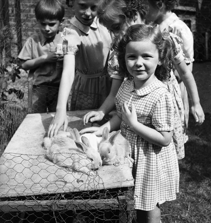 School children petting rabbits; 1949.