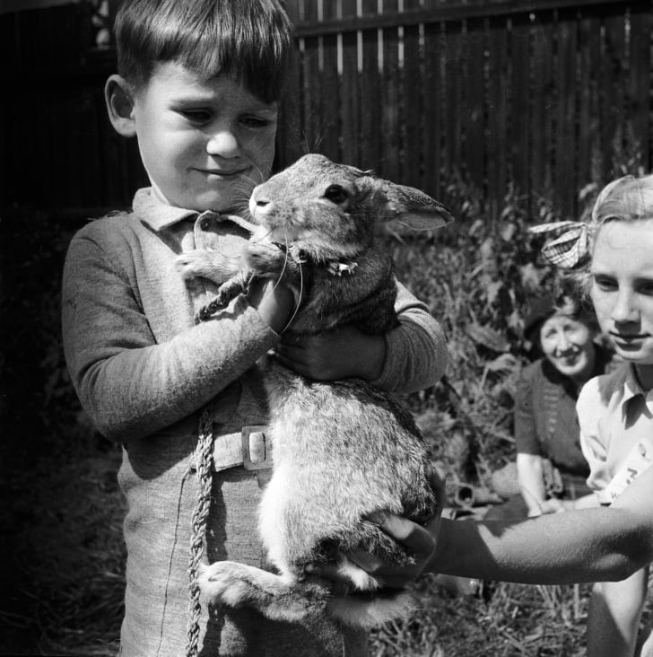 A young boy holds a pet rabbit, 1955.