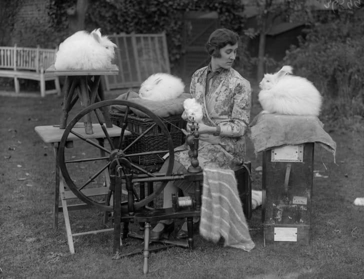 A woman spinning Angora rabbit wool in her garden, 1930.
