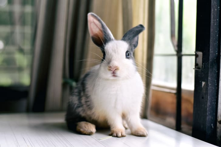 Cute rabbit indoors.