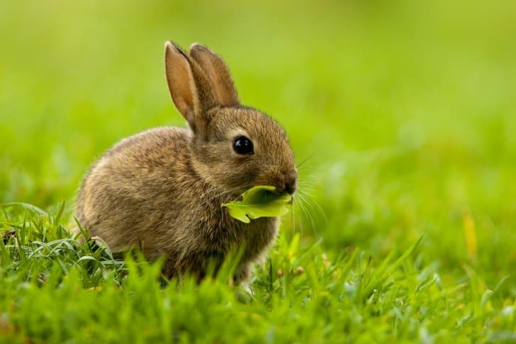 Baby bunny in field.