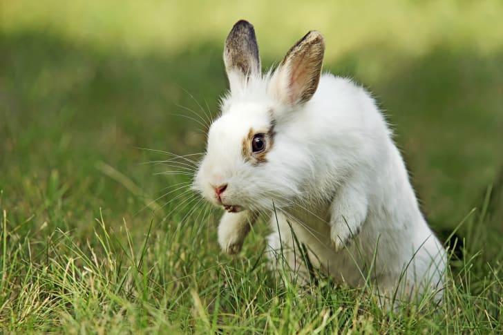 Rabbit hopping outdoors.