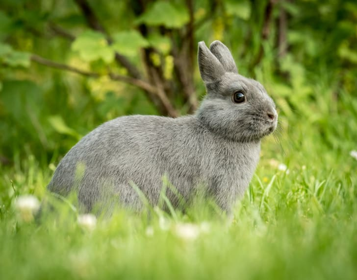 Rabbit in a field.