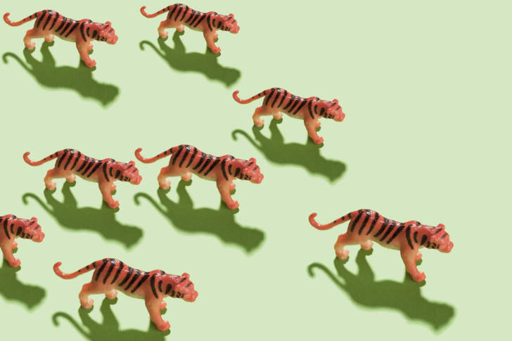 tiger figurines on green ground