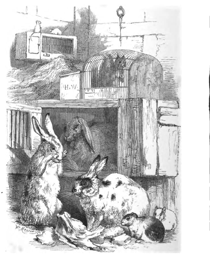 """A selection of Victorian pets from the book """"Domestic pets: their habits and management"""" by Jane Loudon"""