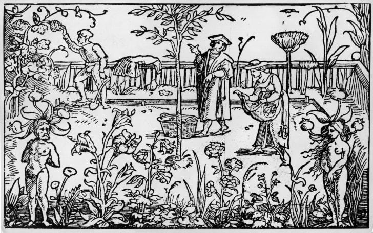An herb garden, circa 1533.