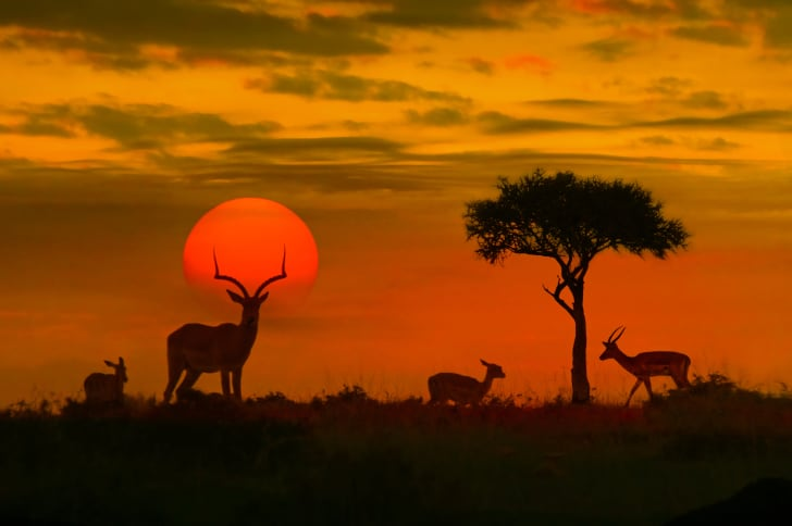 image of impalas in a striking African sunset