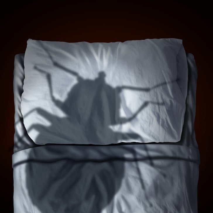 An illustration of a giant bed bug shadow looming over a bed.