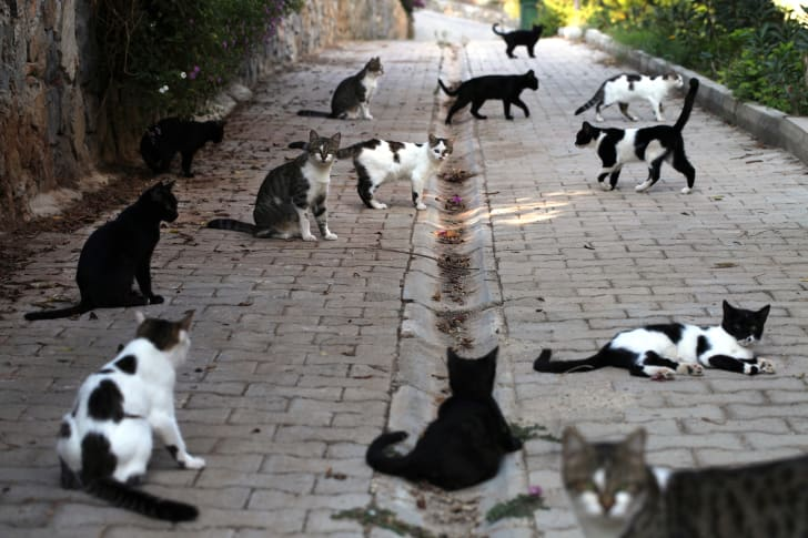 Black and white cats hanging out along a street.