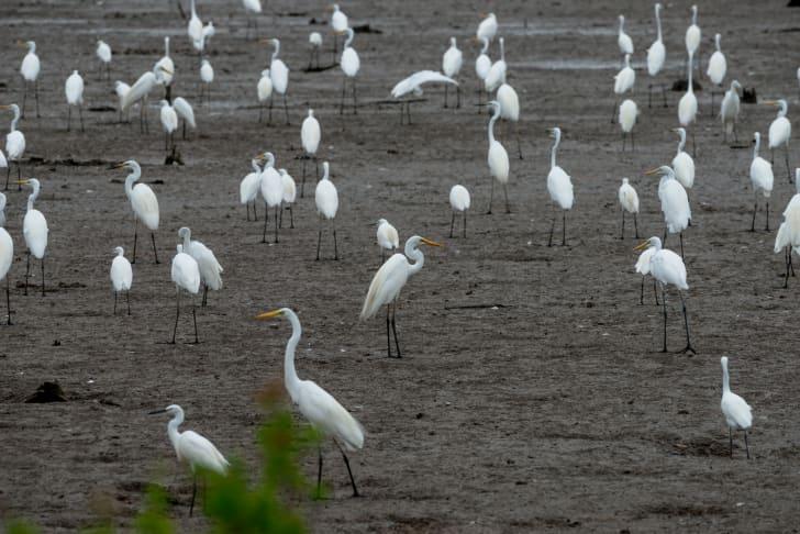 Herons standing in a field.