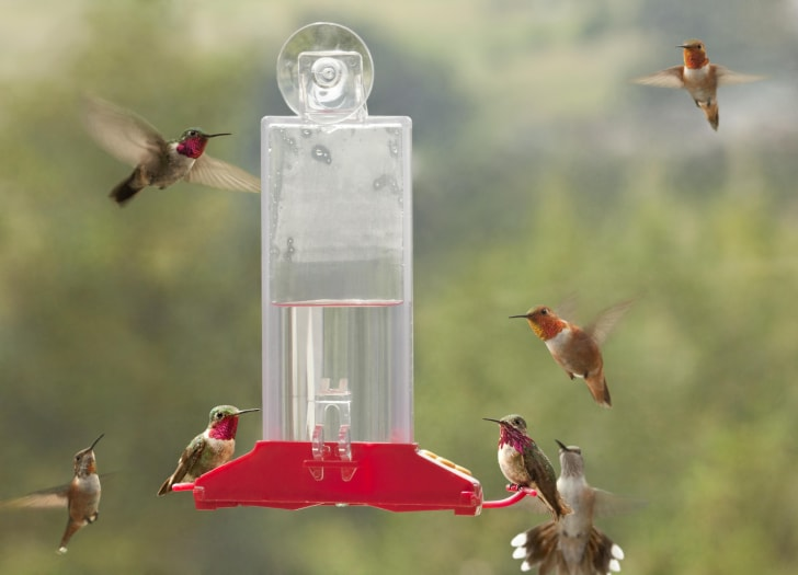 Hummingbirds flitting around a feeder.