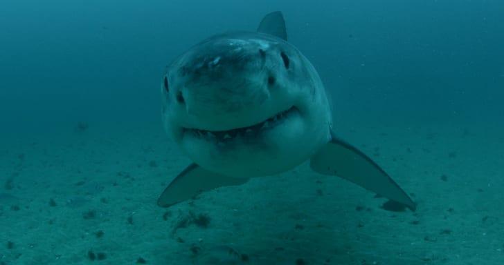 A scene from 'Shark Week'