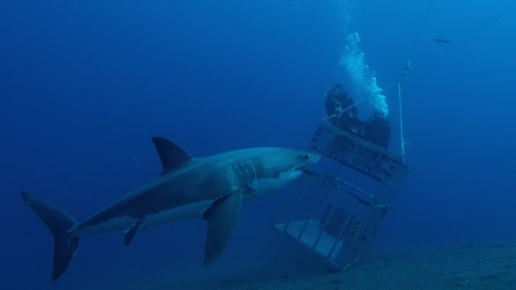 A shark and an underwater cage