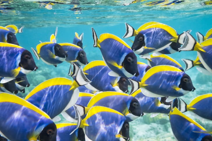 A school of fish swim in the ocean