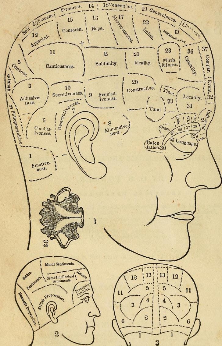 A phrenology chart